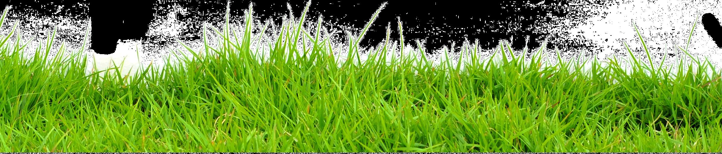 grass_PNG4937